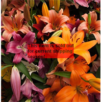 *SOLD OUT* Lily bulk Asiatic Mixed (½ BU - Ships Oct thru June)