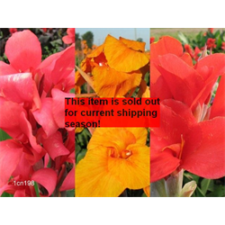 Canna Giant Collection (15 plants per collection - Ships March thru June)