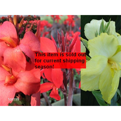 *SOLD OUT* Canna Dwarf Collection (15 plants per collection - Ships March thr