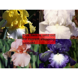 *SOLD OUT* Bearded Iris Collection (20 plants per collection - Ships Oct thru j