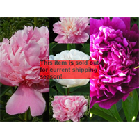 *SOLD OUT* Peony Collection (5 bulbs per collection - Ships Oct thru Jan)