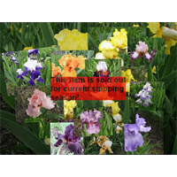 *SOLD OUT* Bearded Iris Mixture (5 plants per pkg - Ships Oct thru Jan)